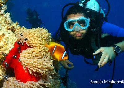underwater-images05