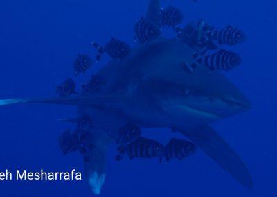 underwater-images14
