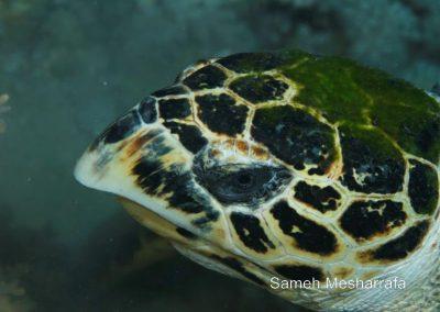 underwater-photos01