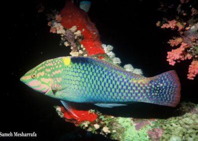 underwater-photos09