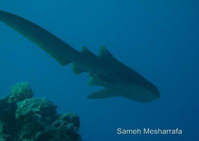 underwater-photos104