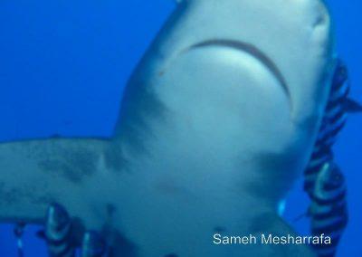 underwater-photos115