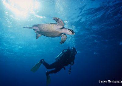 underwater-photos12