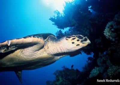 underwater-photos13