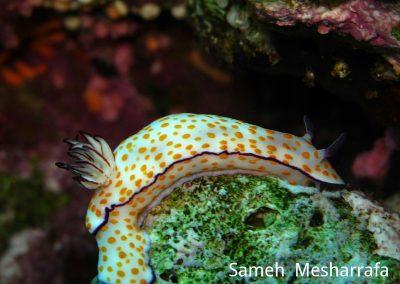 underwater-photos16