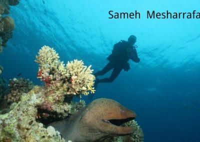 underwater-photos18