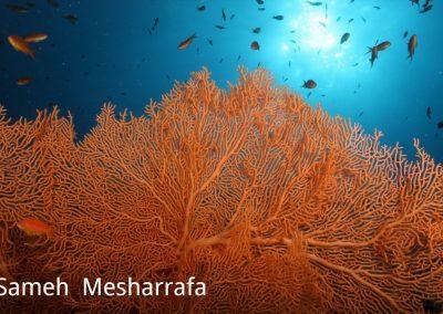 underwater-photos19
