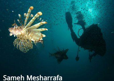 underwater-photos23