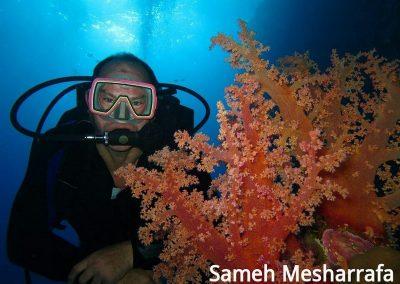 underwater-photos24