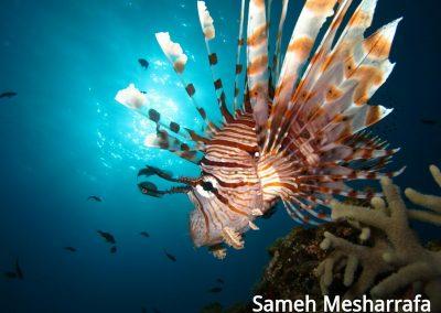 underwater-photos26