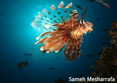 underwater-photos27