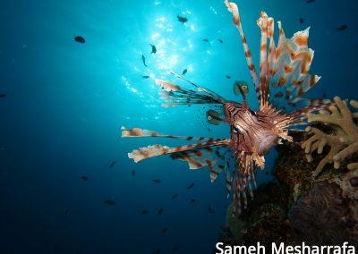 underwater-photos28