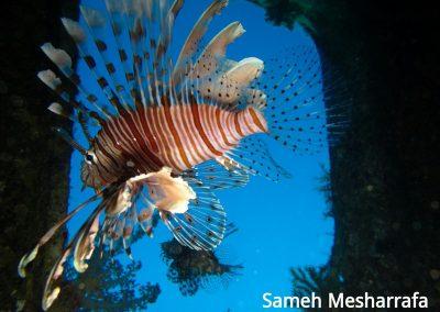underwater-photos30