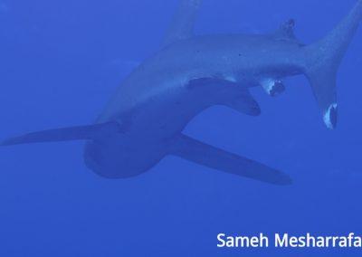 underwater-photos35