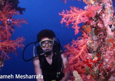 underwater-photos38