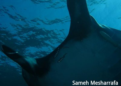 underwater-photos39