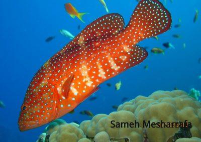 underwater-photos40