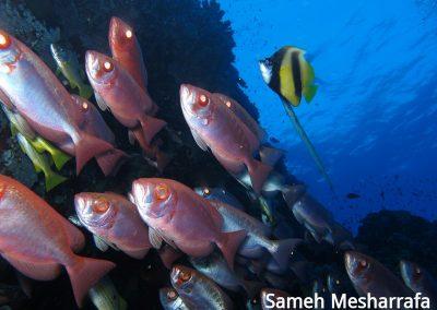 underwater-photos43