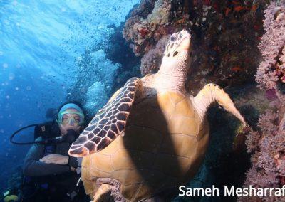 underwater-photos45