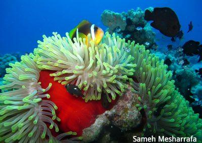 underwater-photos46