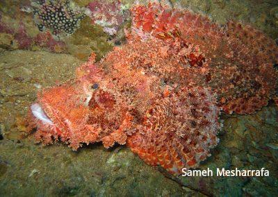underwater-photos52