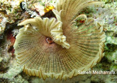 underwater-photos55