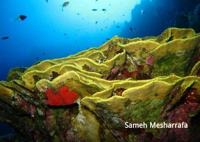 underwater-photos57