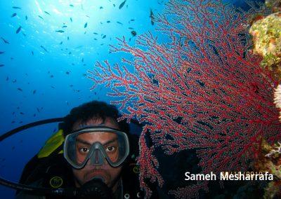 underwater-photos59