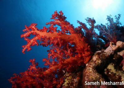 underwater-photos64