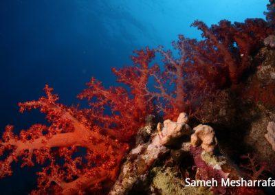 underwater-photos65