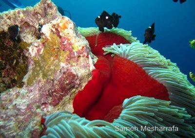 underwater-photos69
