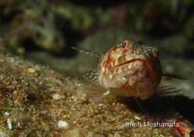 underwater-photos71