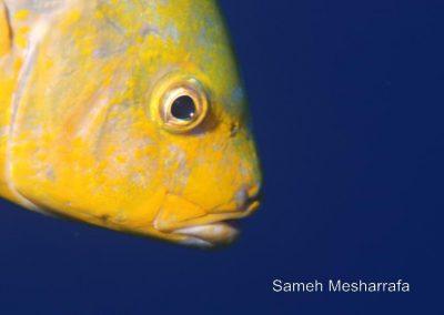 underwater-photos73