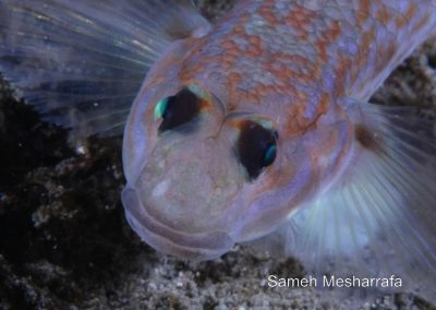 underwater-photos74