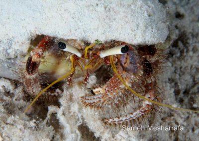 underwater-photos76
