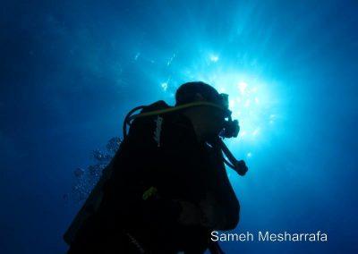 underwater-photos78