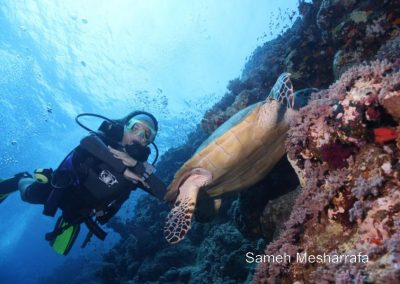 underwater-photos82