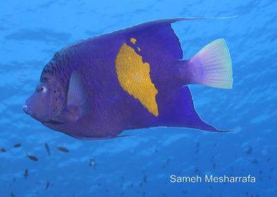 underwater-photos83