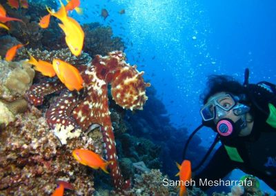 underwater-photos86