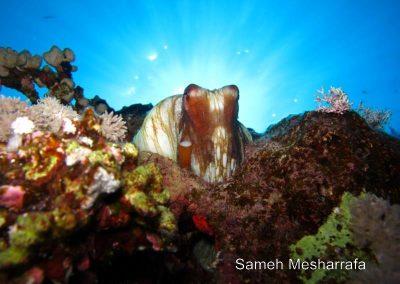 underwater-photos89