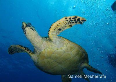 underwater-photos90
