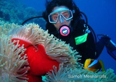 underwater-photos94