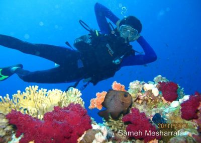 underwater-photos97
